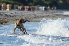 Kimya am Strand, 10. Juli 2014